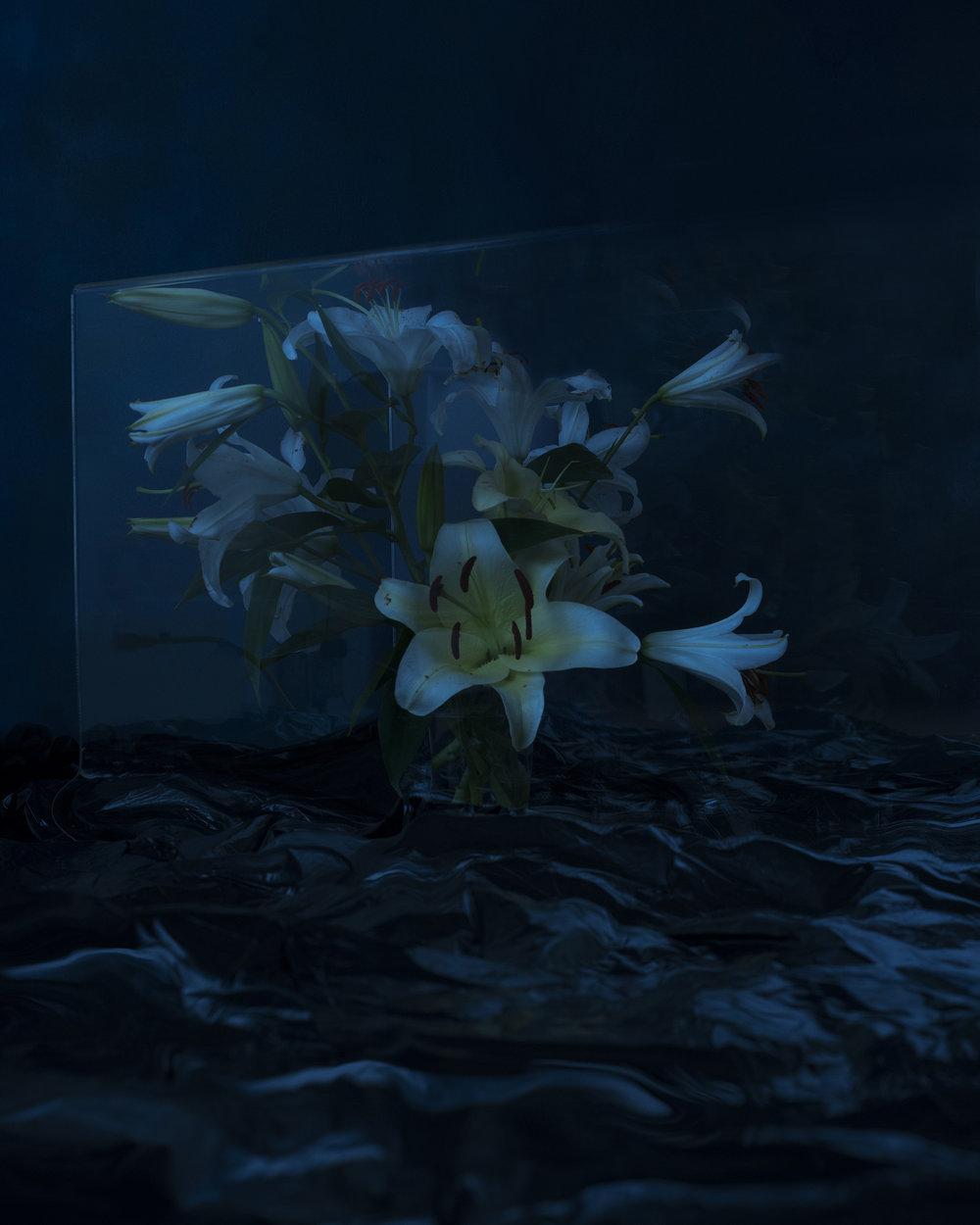 Valeria_Serpent Botanical_01Productions_flowers8.jpg