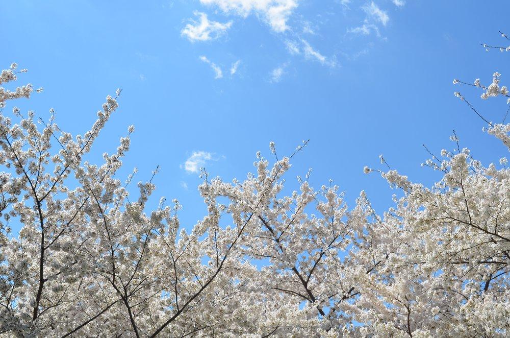 2.28_Spring.jpg