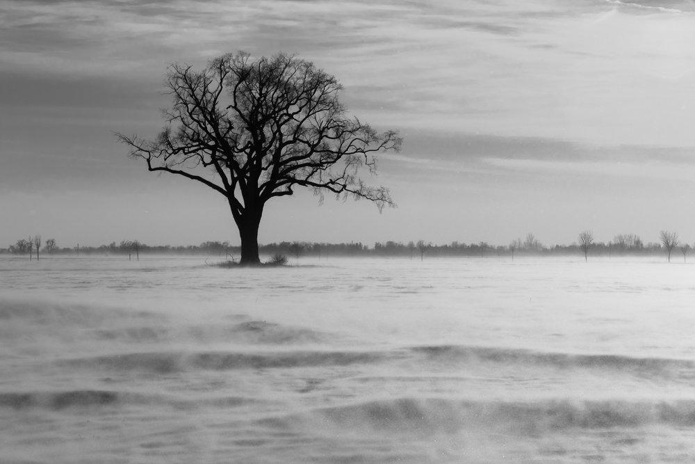 Snowy Lone Tree