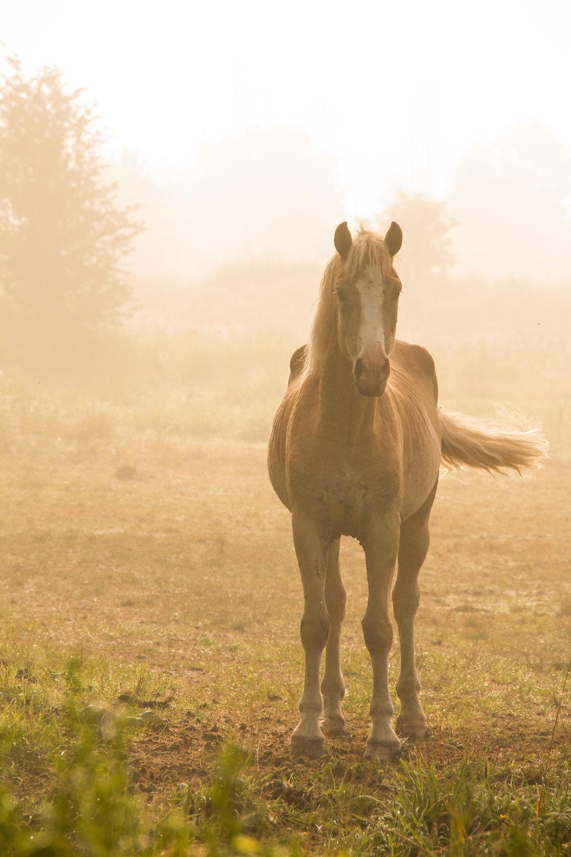 Horse in Morning Fog