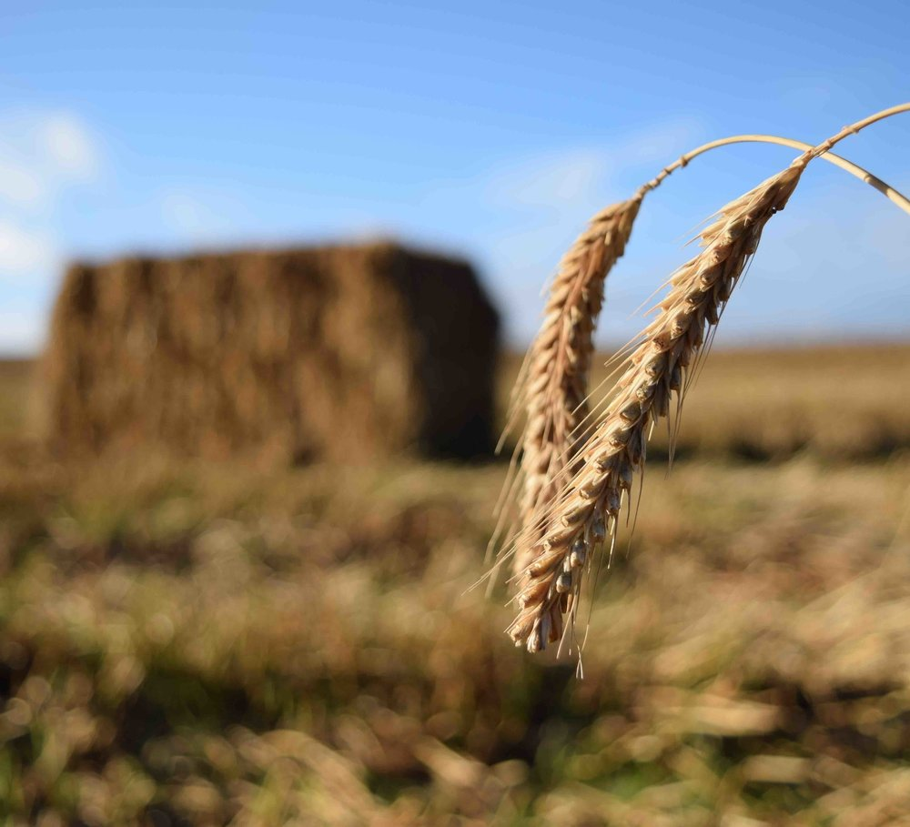 bigstock-Wheat-Harvest-With-Straw-Bale--101383490web.jpg