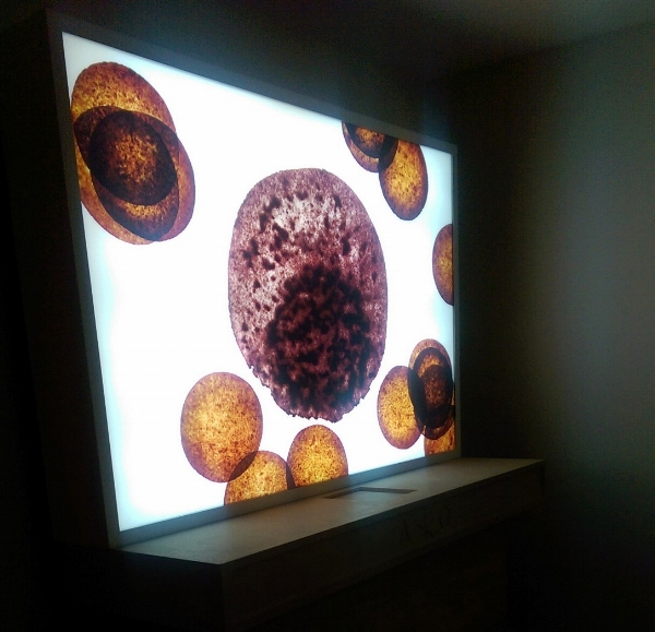 Dean Kessmann,  Untitled (Wafer and Wine/Blood Cells) . Digital Duratrans, aluminum light box. 2000. MOCRA.
