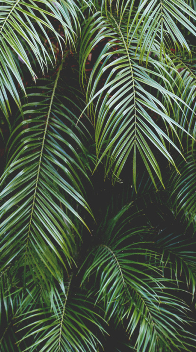 palms_leaves.jpg