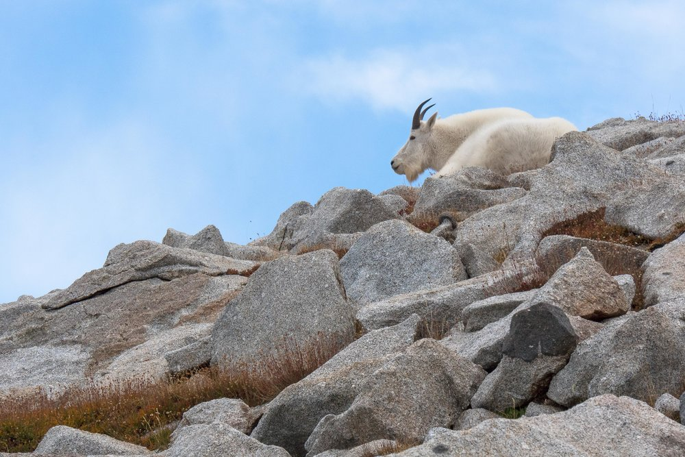 2016 - King of the Mountain, Lone Peak Wilderness
