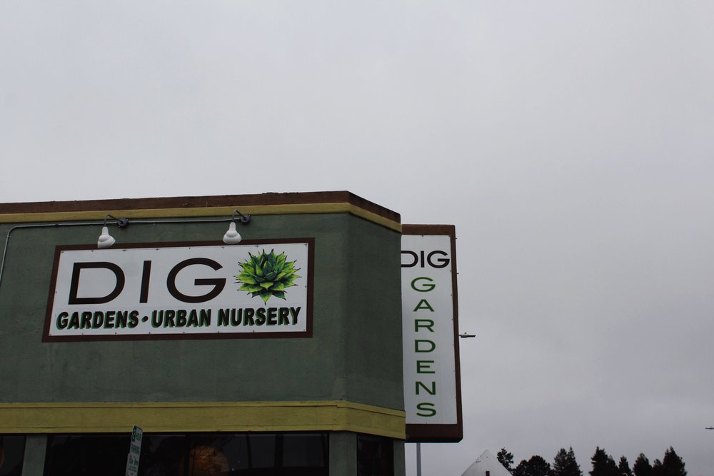 Dig Gardens in Santa Cruz. An urban nursery for succulents and air plants.