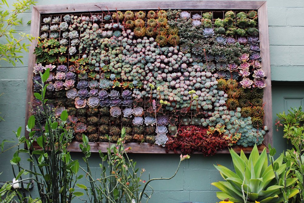 Succulents in a large wall framed pot