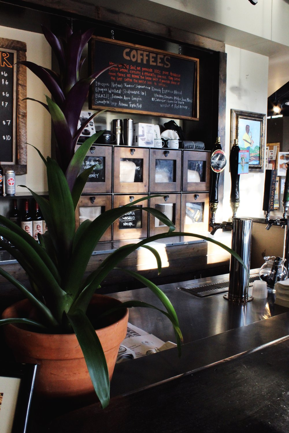 Old Soul Coffee in Oak Park Sacramento/ green leafy Plant / Beers on tap