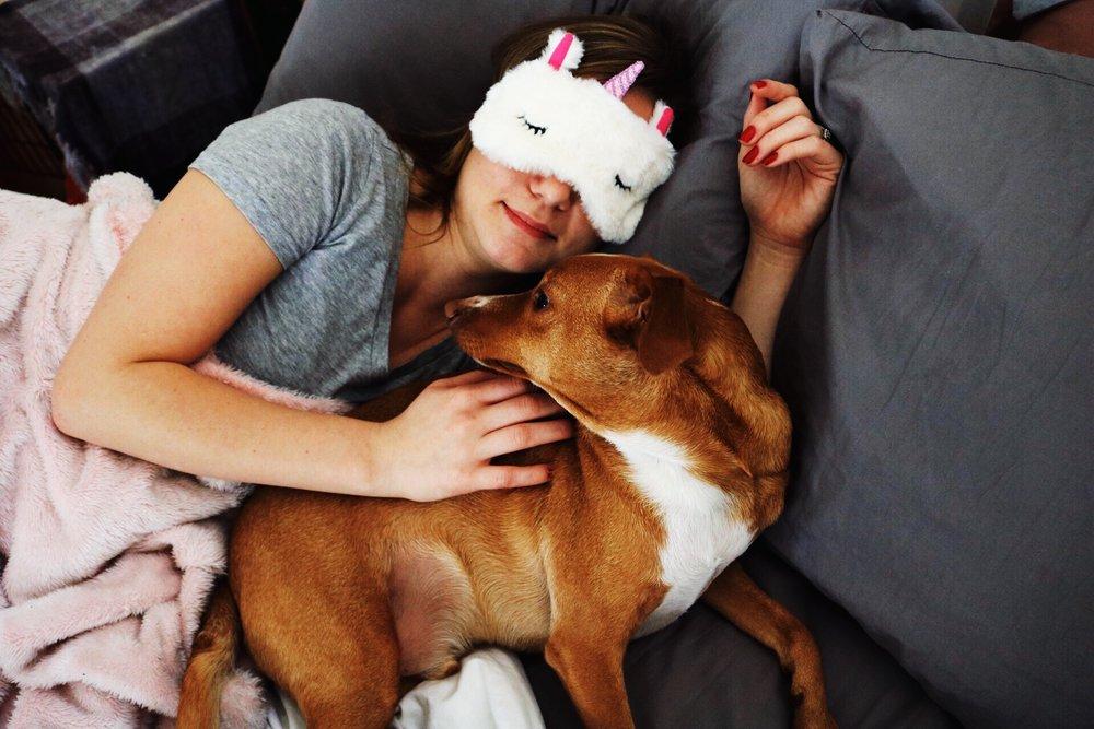 Blush pink blanket unicorn sleep mask small tan dog