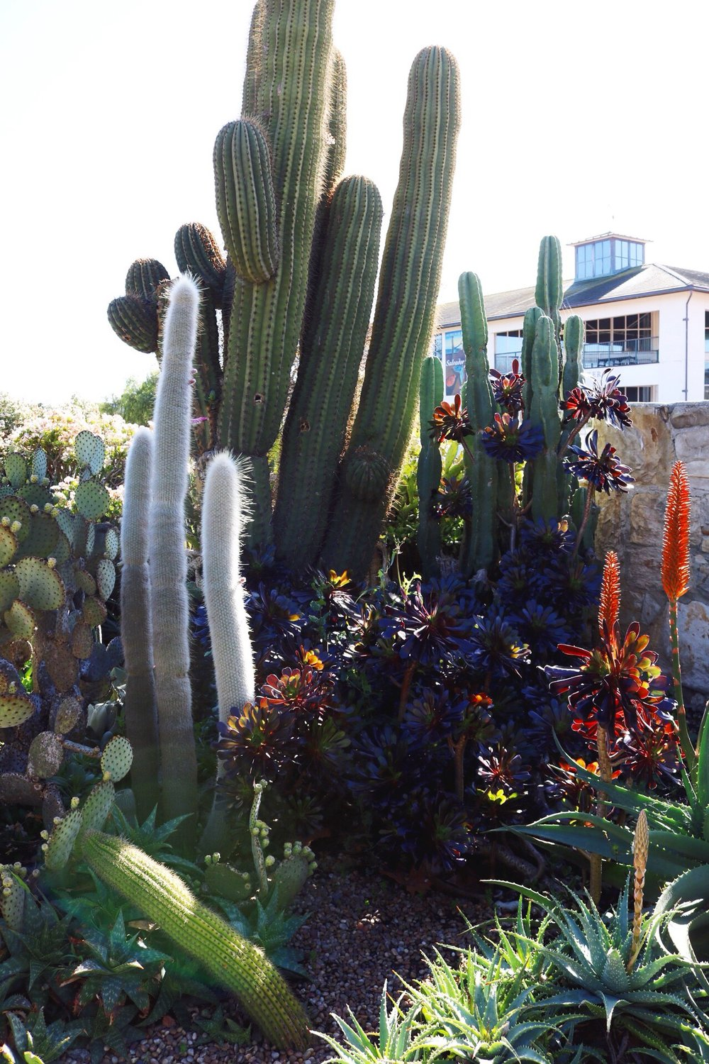 Succulents Pacific House Monterey Beach California Cacti