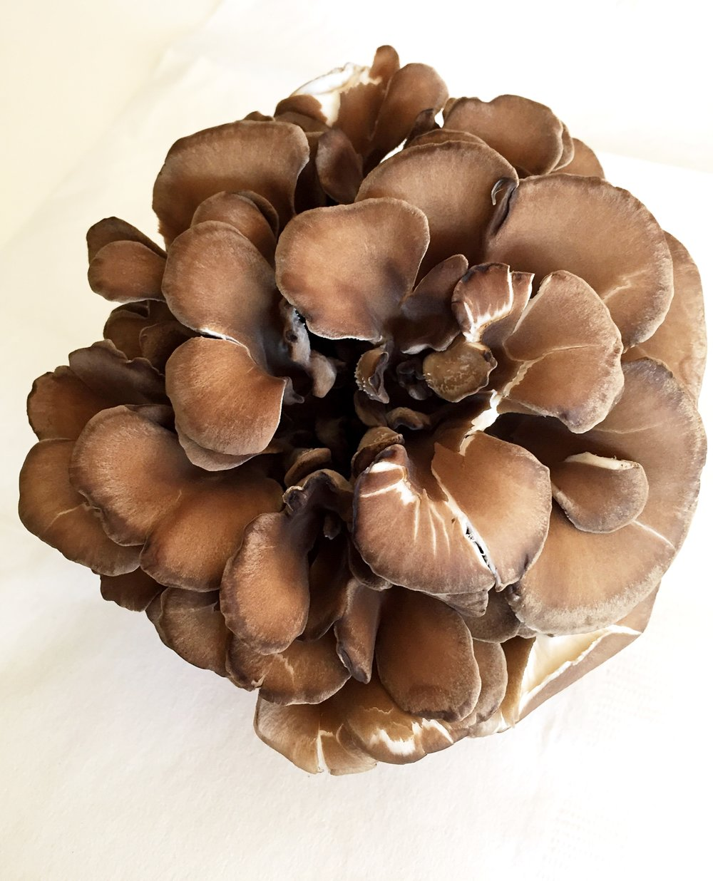 Maitake mushroom! I used a little over half.