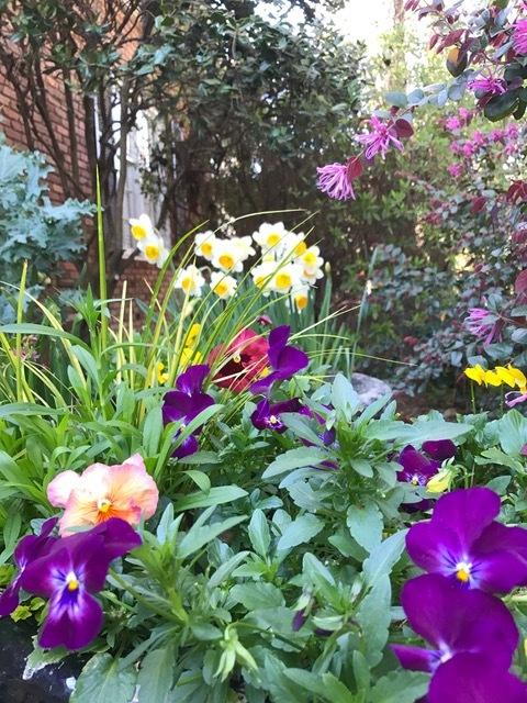 Color+Max+Purple+Violas.jpg