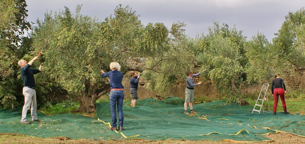 Olea of Monemvasia | Award winning olive oil | What is Extra Virgin Olive Oil (EVOO) | cold pressed olive oil