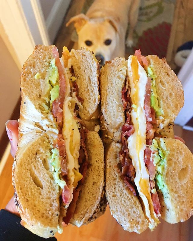 bacon, eggs, avocado, and tomato on an everything bagel with a side of begging pup face 🐶 • • • • • • • • #jamshungry #topcitybites #heresmyfood #bestfoodworld #realfoodz #foodprnshare #eatfamous #feedyoursoull #healthyish #onmytable #whattoeat #yougottaeatthis #dailyfoodfeed #treatyoself #forkyeah #avocadotoast #bacon #brunch #PalateConnect #nyeats #eeeeeats #brekkie #breakfast #avocado #cheatday #cheatdayeats