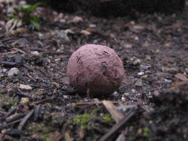 A finished seed ball.