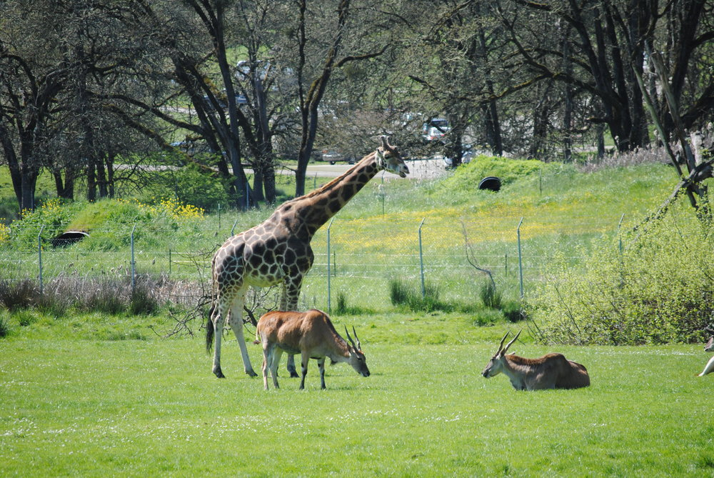WILDLIFE SAFARI - What to do for Spring Break - What to do in Southern Oregon - Things to do in Winston & Roseburg