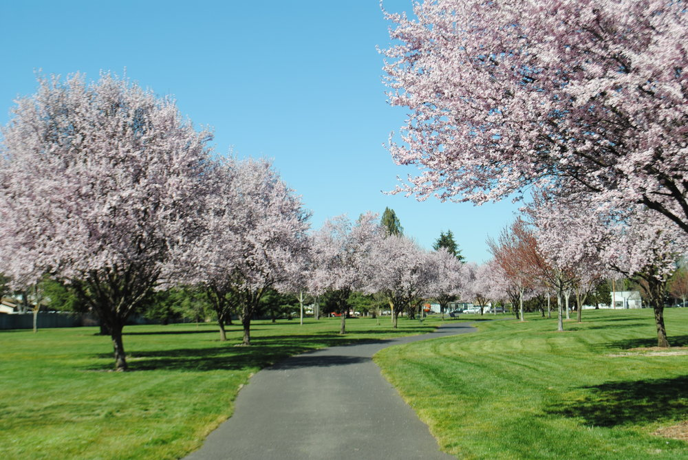 FICHTNER MAINWARING PARK - What to do in Southern Oregon for