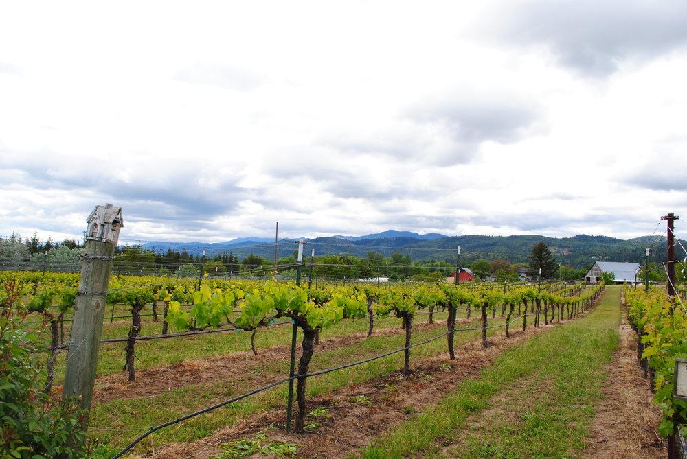 Caprice Vineyards