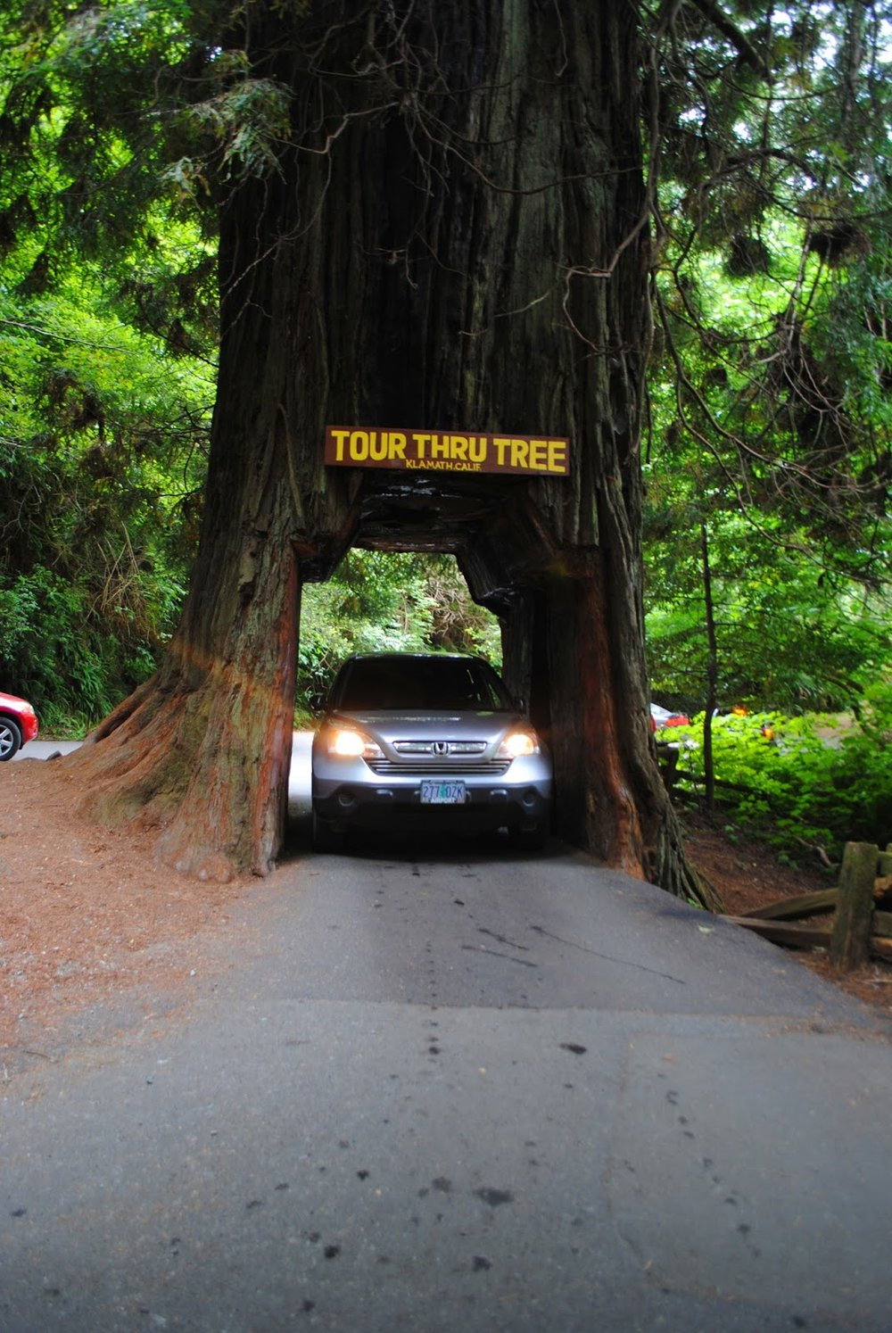 DRIVE-THRU REDWOOD TREE - Norhtern California - What to do in SOuthern ORegon - Camping - Kid-Friendly - Fun