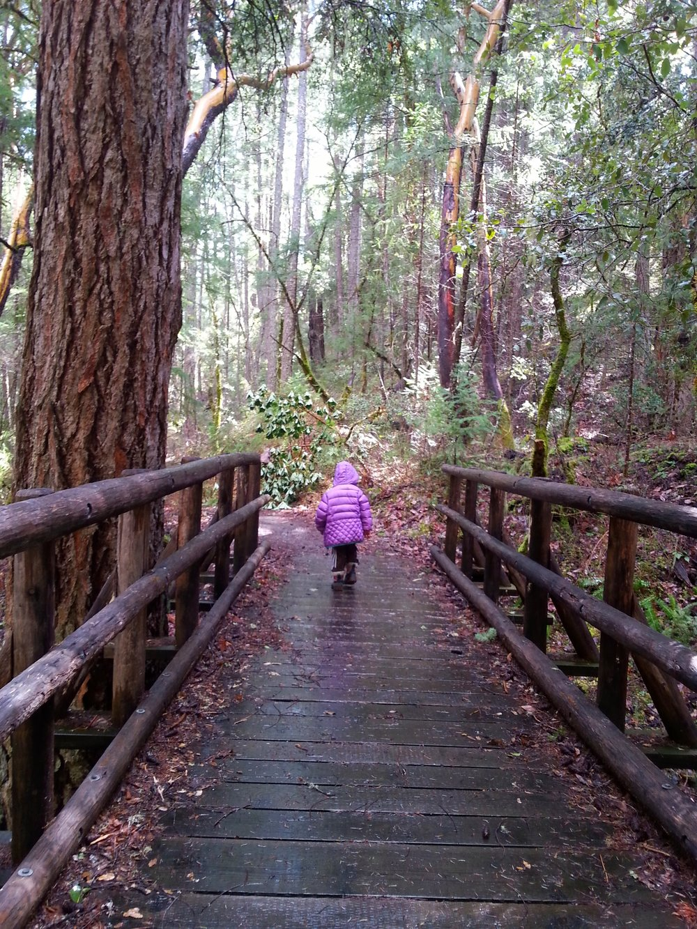 BIGFOOT TRAP - COLLINGS MOUNTAIN TRAIL #943 - What to do in Southern Oregon - Things to do - Hiking - Kids - Applegate - Jacksonville