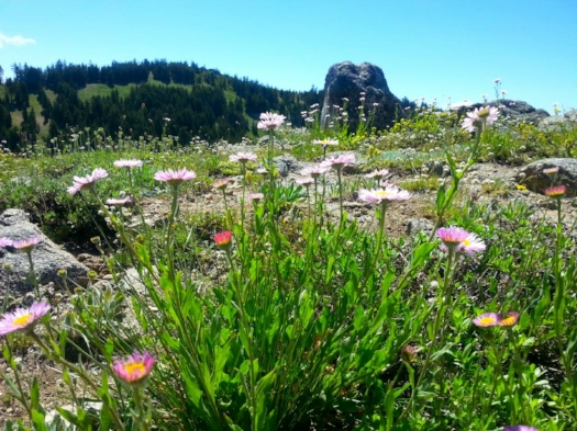 Pacific Crest Trail - Ashland Meadows  - 17 SOUTHERN OREGON ADVENTURES YOU DO NOT WANT TO MISS - What to do in Southern Oregon