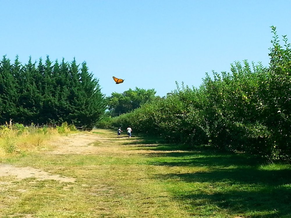 LEONARD ORCHARD APPLE PICKING - What to do in Southern Oregon - Medford - Kids