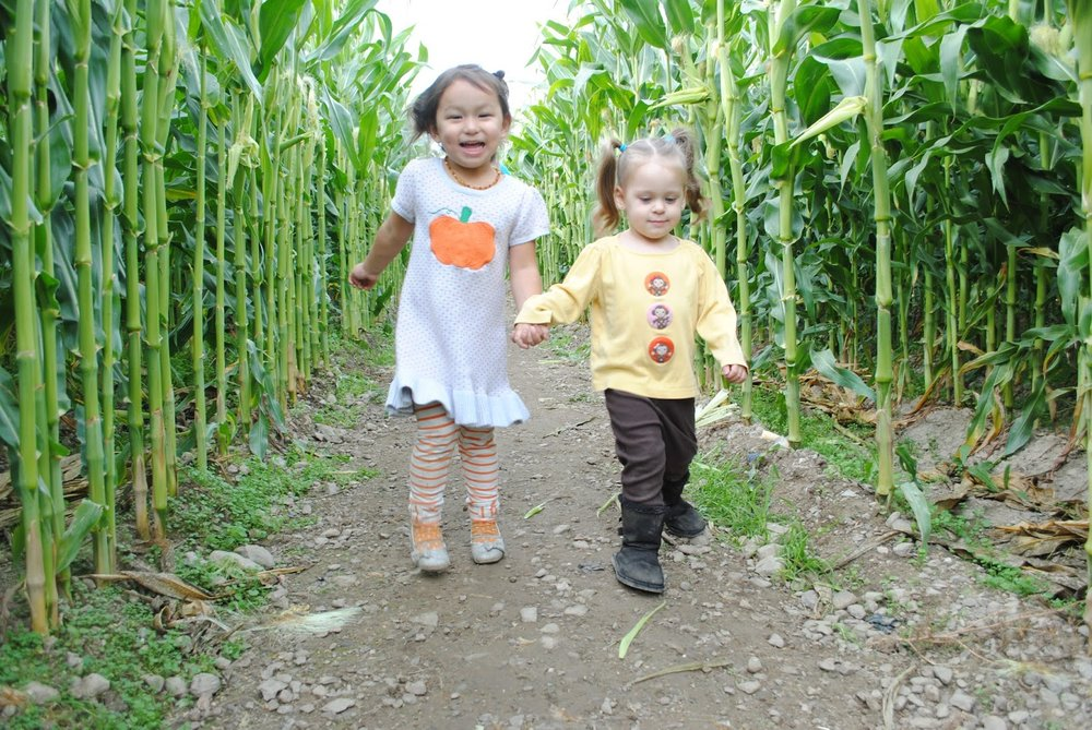 Pheasant Fields Farm - Medford - Phoenix - Fall - Corn Maze - What to do in Southern Oregon