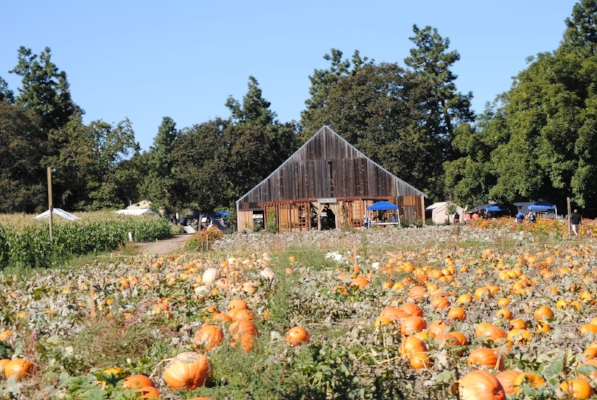 PHEASANT FIELDS FARM - Medford - Pumpkin Patches - What to do in Southern Oregon - Fall - Kids