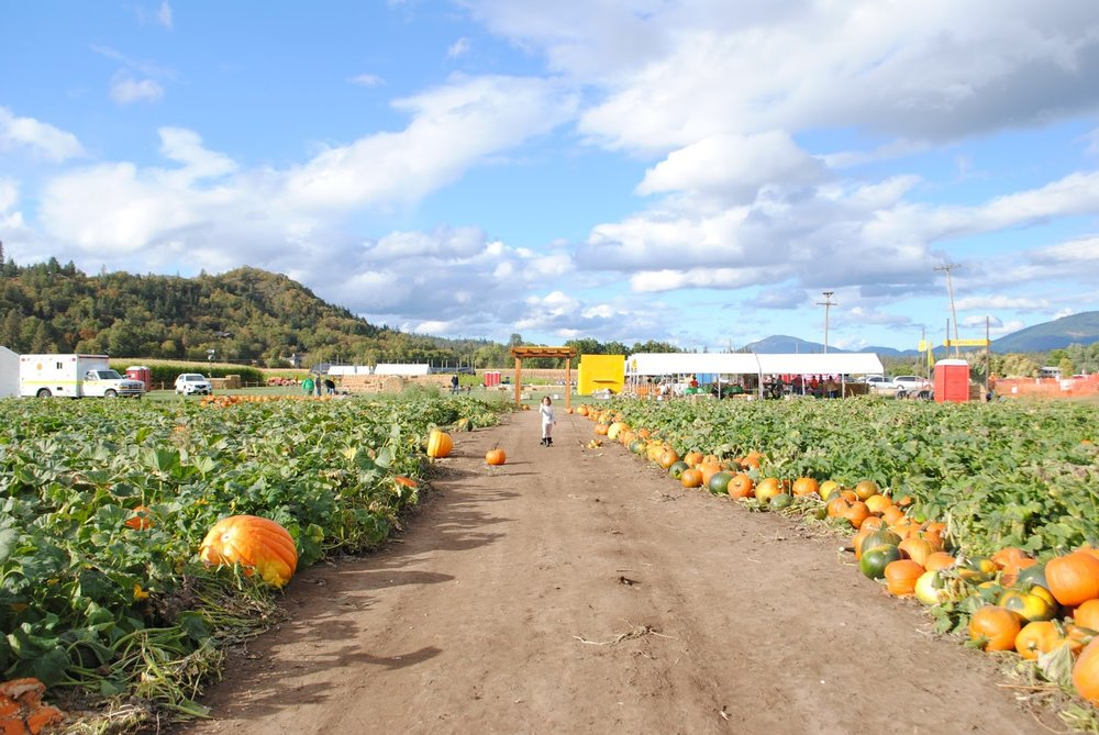 Fort Vannoy Farms Harvest Festival - Grants Pass, Oregon - Josephine County - Rogue Valley - Southern Oregon - Fall - Autumn - Pumpkin Patch - Corn Maze - Hayrides (237).JPG