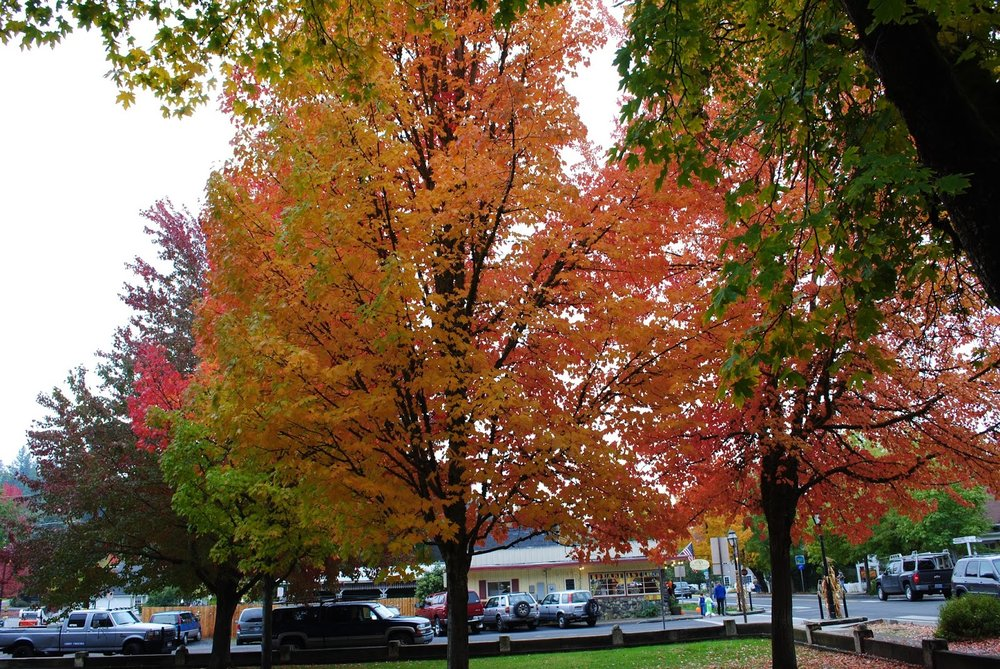Jacksonville Halloween Promenade-Jacksonville - Trick-or-Treating - What to do in Southern Oregon - Fall Colors