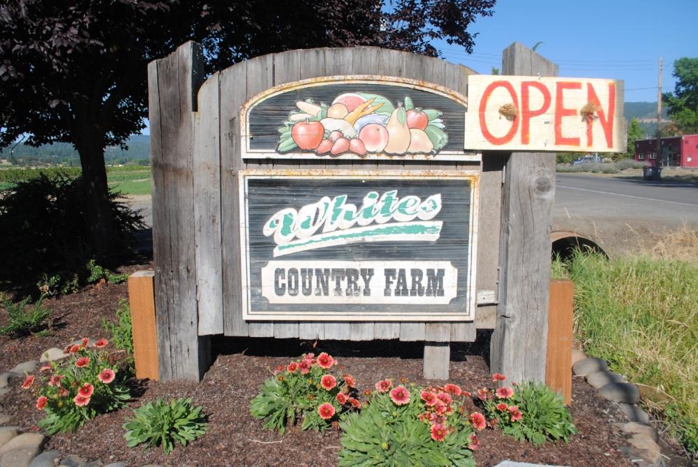 Whites Country Farm - Medford, Oregon - Rogue Valley - Jackson County - Southern Oregon - U-Pick peaches