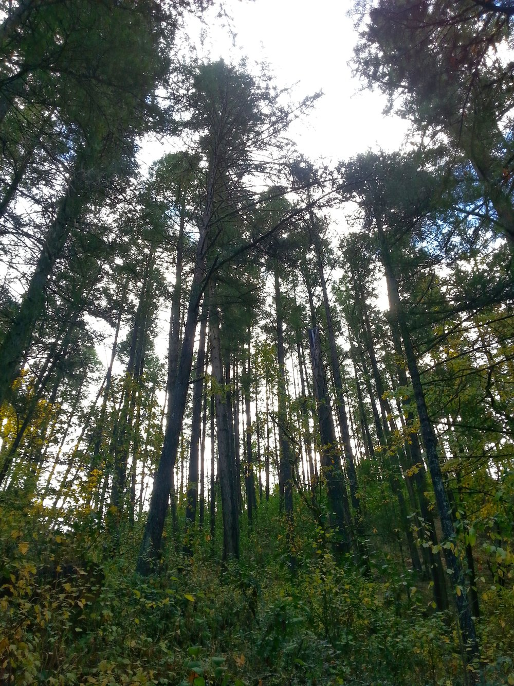 Sarah Zigler Trail - Britt Trails - Jacksonville Oregon - Hiking - What to do in Southern Oregon