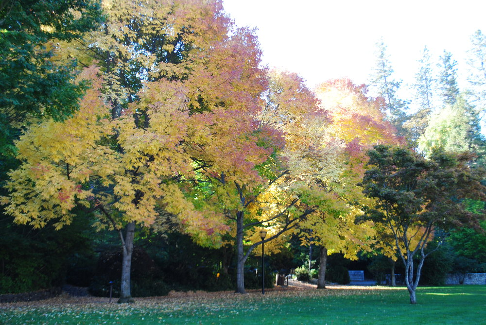 Lithia Park - Ashland - Hiking - What to do in Southern Oregon