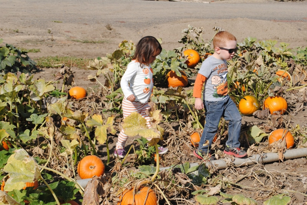 Seven Oaks Farm - Central Point - Fall - Pumpkin Patch - What to do in Southern Oregon