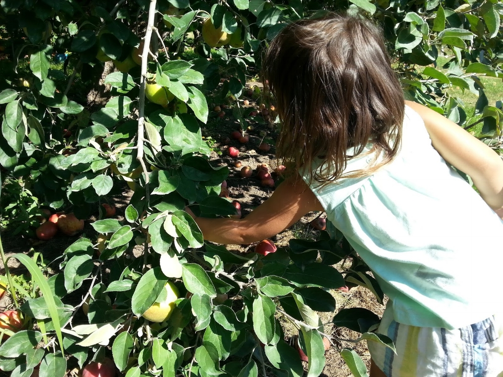 Apple Picking - Leonard Orchard - Medford - Fall - What to do in Southern Oregon