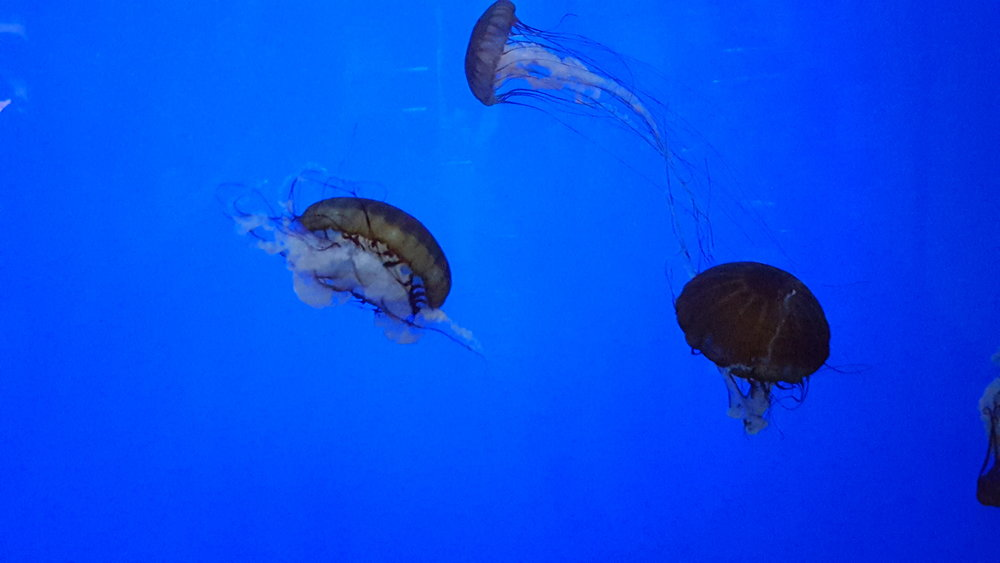 Oregon Coast Aquarium - Newport - What to do in Southern Oregon