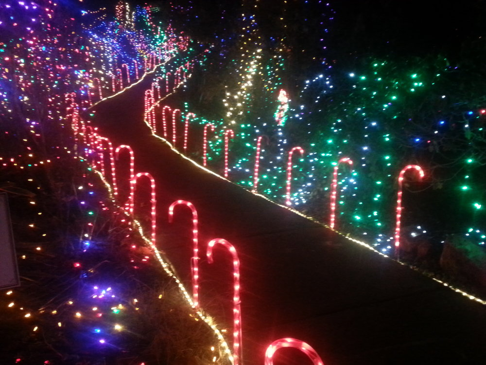 Nature's Coastal Holiday Festival of Lights - Brookings - What to do in Southern Oregon
