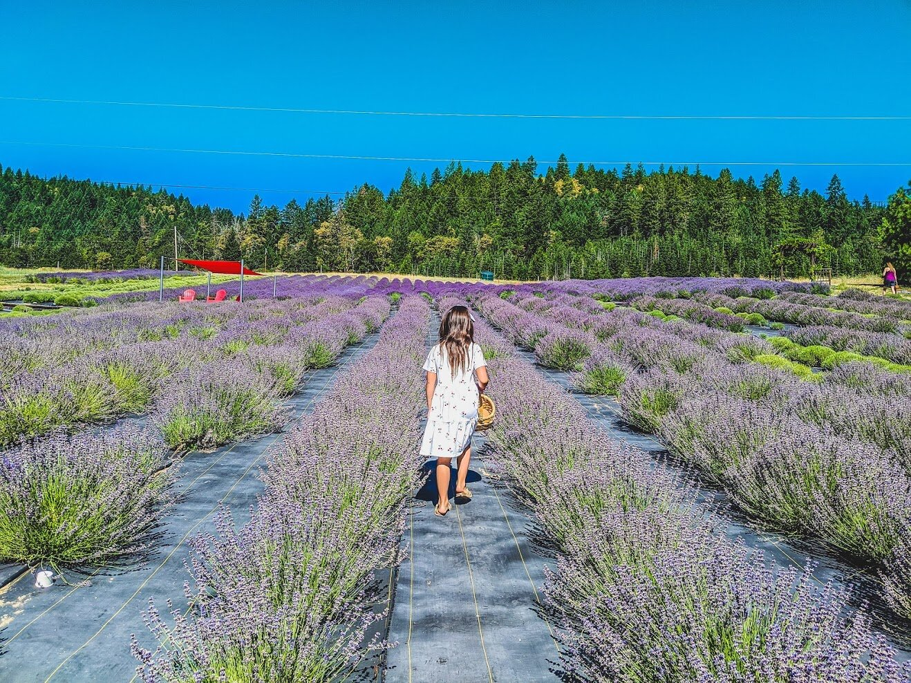 LAVENDER FESTIVAL FUN WITH THE FAMILY — What to do in