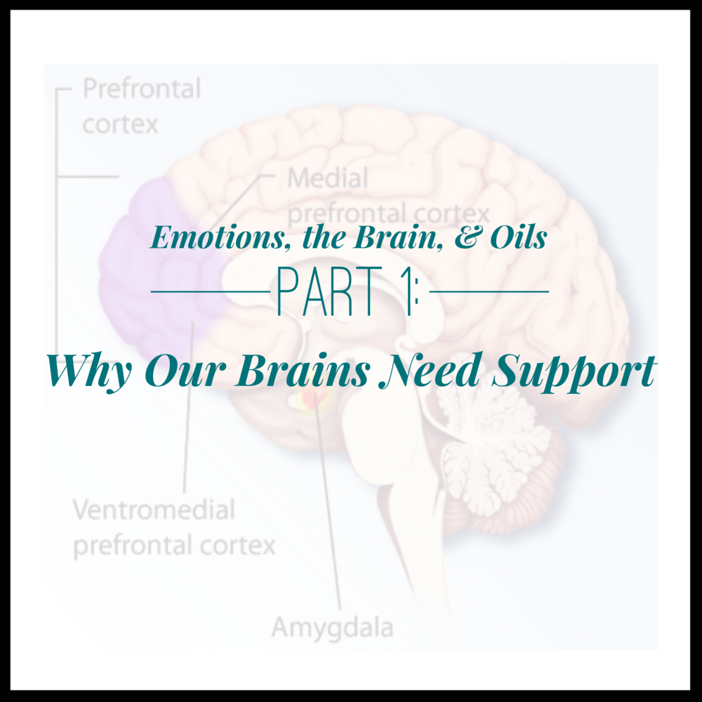 brain-oils1.PNG