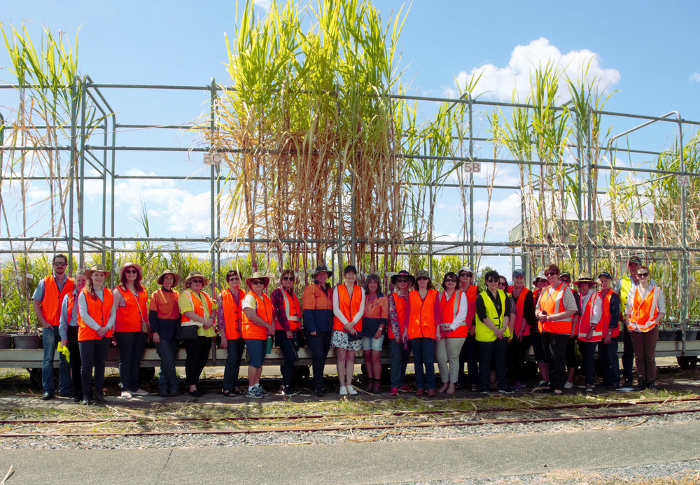 Attendees of the Cairns Region CANEGROWERS women's field day visiting the cane variety breeding program at Sugar Research Australia.