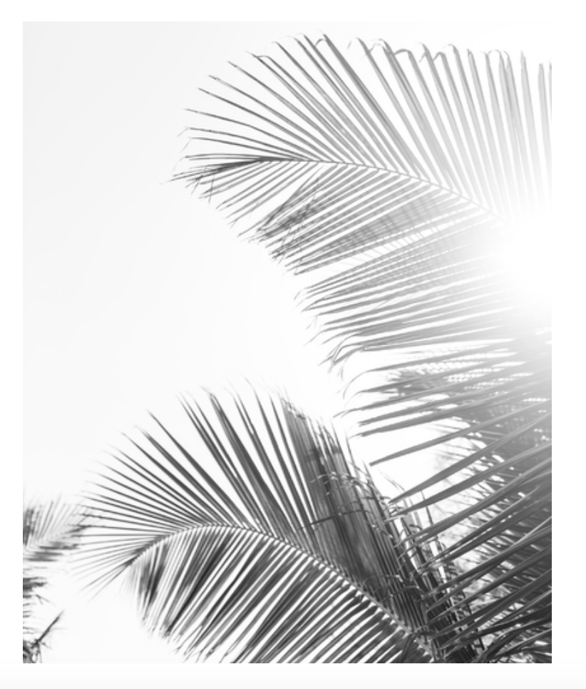 Palms Photography Print