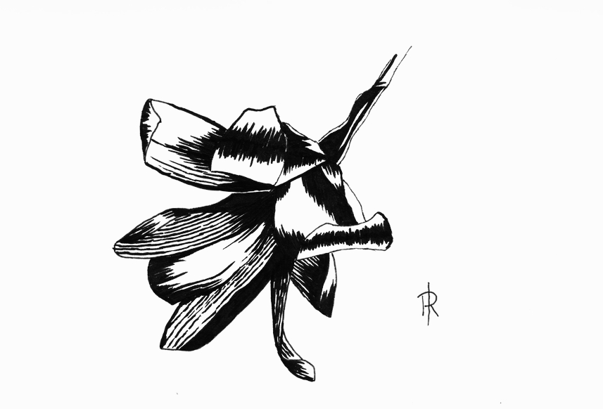 pen and ink magnolia