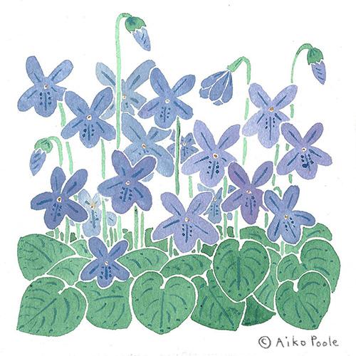violets-b.jpg