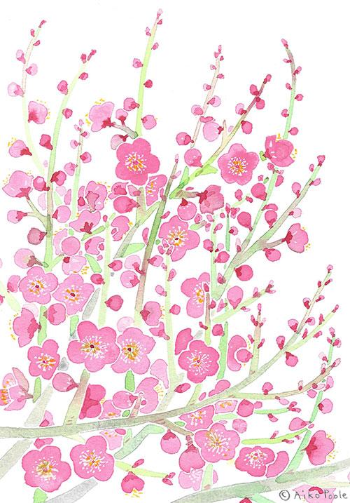 plumblossoms-b.jpg