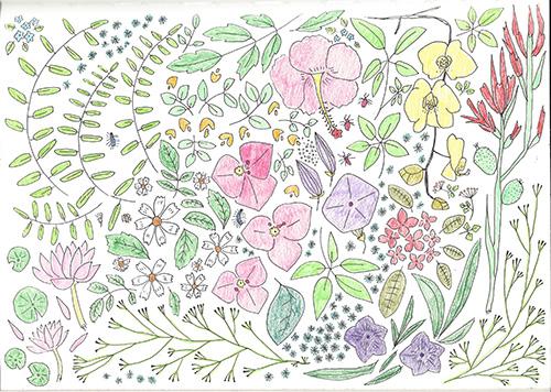 Flowers of Taipei/台北の花たち