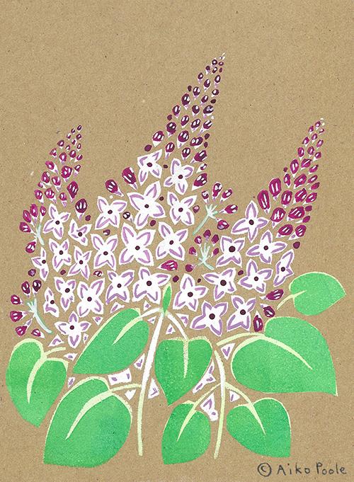 lilac-b.jpg