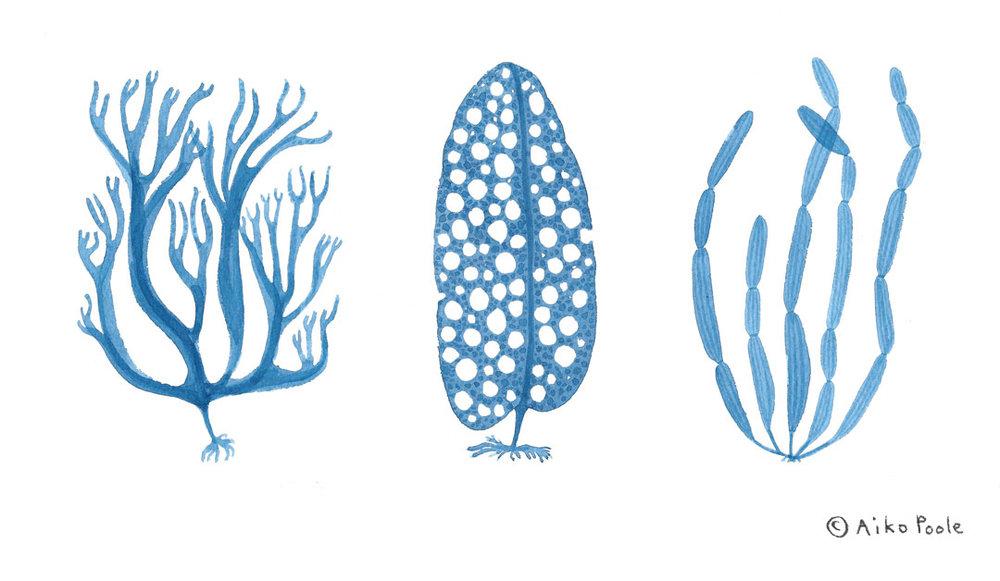 seaweed-b.jpg