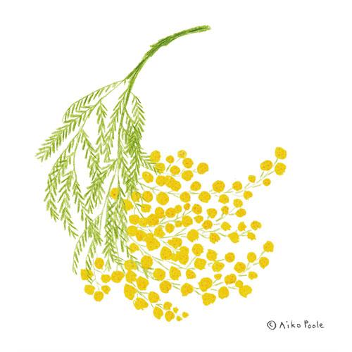 mimosa-b.jpg