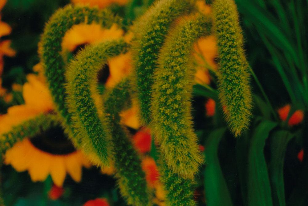 Flowers to Print-9.jpg