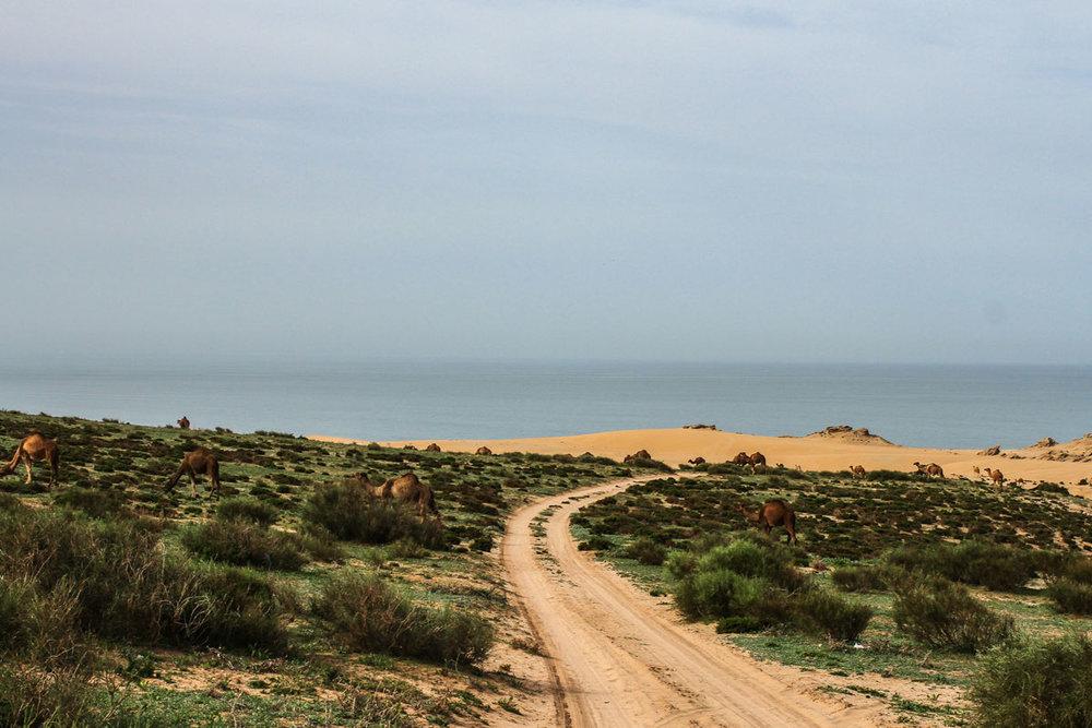 morocco landscape.jpg