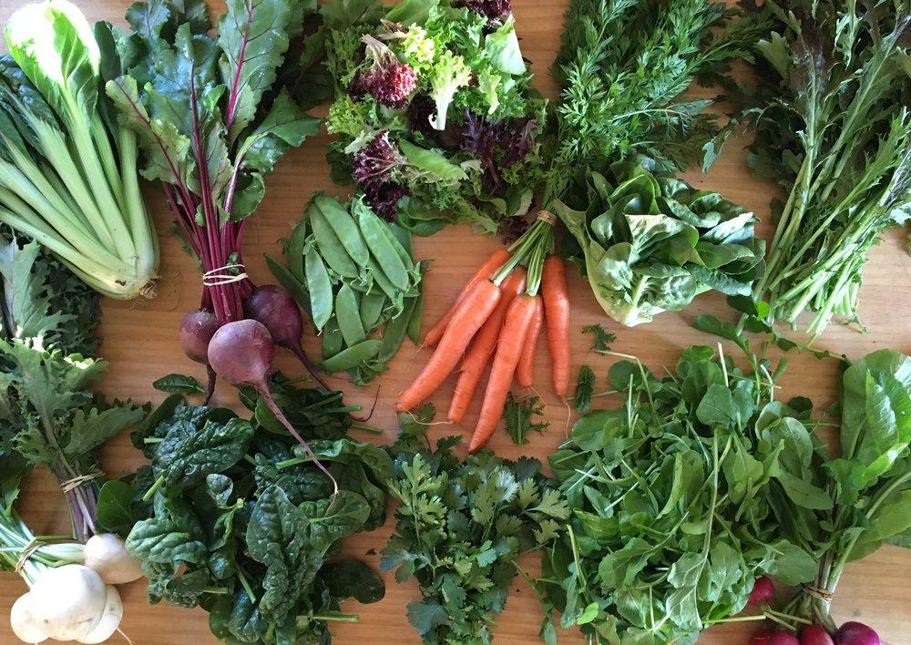 CSA Harvest - Week #2